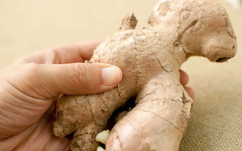 1436801834-gniy670px_grow_a_ginger_plant_step_1_lfyz